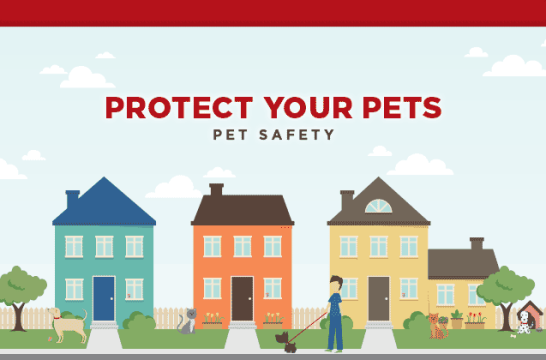 infographic-pet-safety-tgt