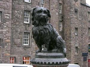 Syke Terrier Named Bobby