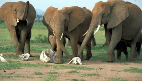elefantes-crc3a1neos